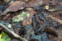 ジャングルの生き物 (5)-s.jpg