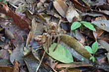 ジャングルの生き物 (7)-s.jpg