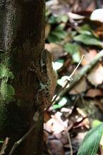 ジャングルの生き物 (8)-s.jpg