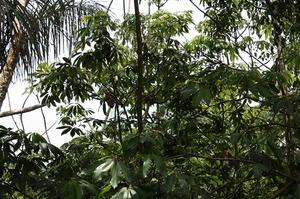 ジャングルの生き物(13)-s.jpg