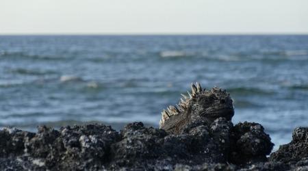 海イグアナ (13).jpg